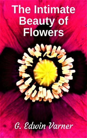 The Intimate Beauty of Flowers ebook
